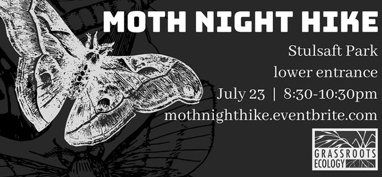 moth-night-hike
