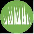 grass_green